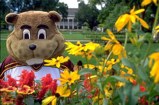 Goldy and flowers
